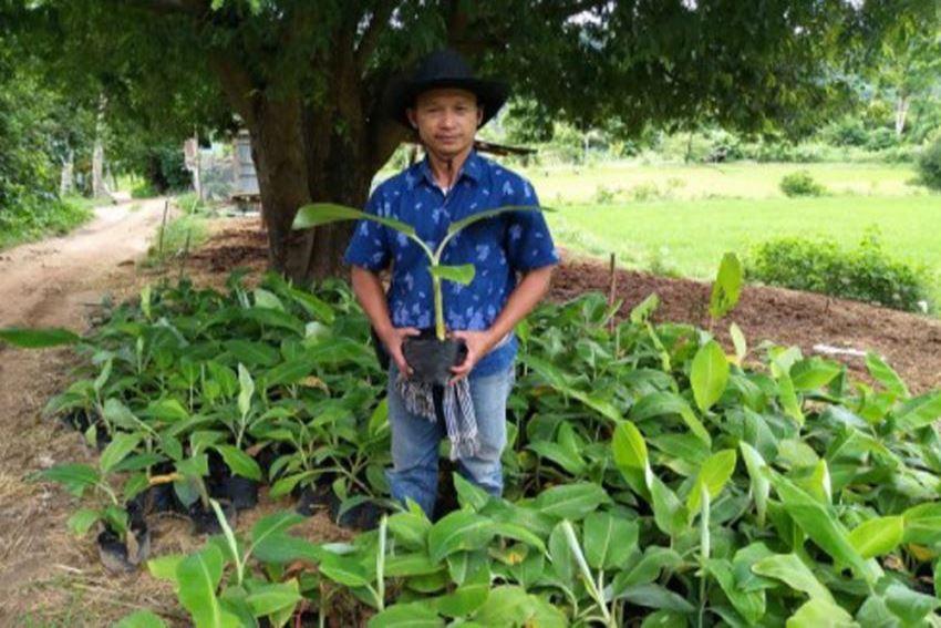 กลุ่มบ้านนาพึงอำเภอนาแห้วเพาะแยกหน่อกล้วยขายเดือนละ6,0007,000หน่อ