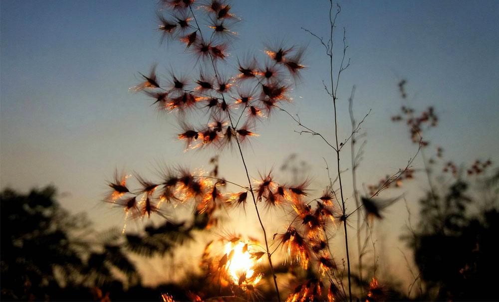 ดอกไม้เรืองแสง