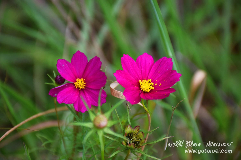 ดอกไม้บานสพรั่งเต็มสองข้างทาง.jpg