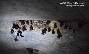 ค้างคาวในถ้ำนรก