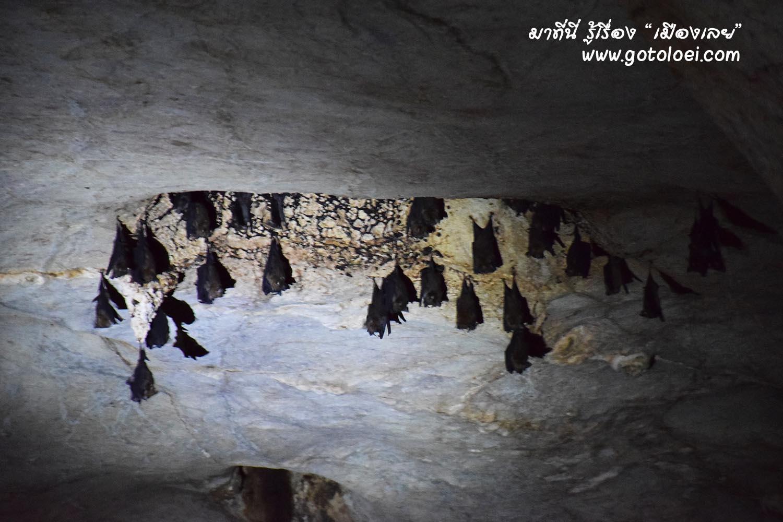 ค้างคาวในถ้ำนรก.jpg