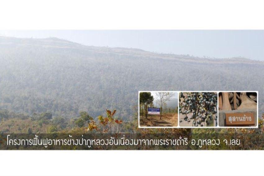โครงการฟื้นฟูอาหารช้างป่าภูหลวงอันเนื่องมาจากพระราชดำริอำเภอภูหลวงจังหวัดเลย
